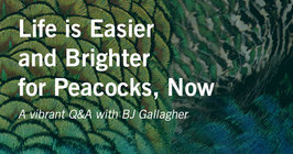 Life is Easier and Brighter For Peacocks Now