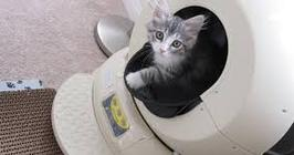 Automatic Litter Box-- The Complete Purchaser's Guide & Reviews